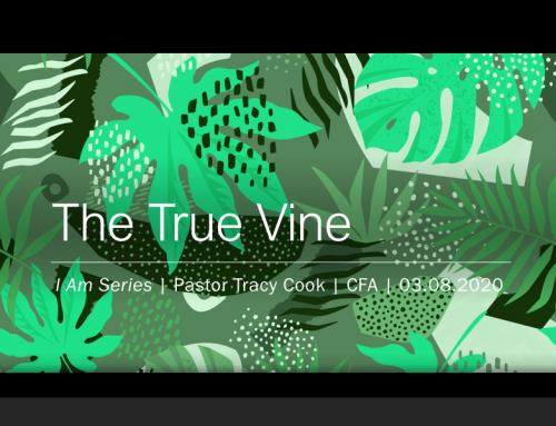 I Am… The True Vine